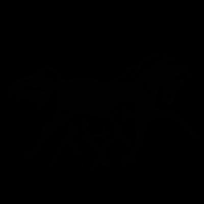 Cheval - Jument et son poulain